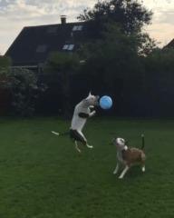 Шарики и шарик