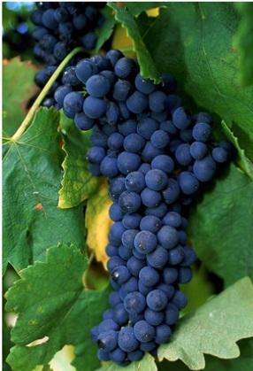 Всё-всё-всё о вине и не только. Часть 5 вино, виноделие, алкоголь, длиннопост