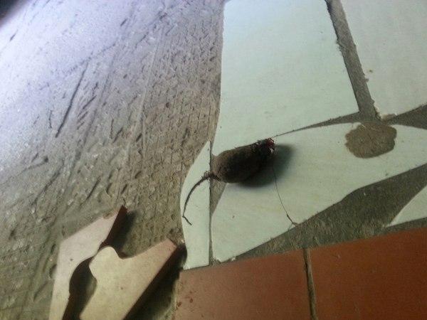 Мышка доброе утро, показалось