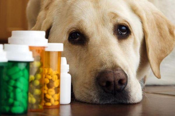 В США принимают антибиотики для животных, чтобы экономить антибиотки, животные, Америка, экономия, политика, Медицина