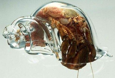 Этот крабик - настоящий трансформер - так компактно сложился в раковине))