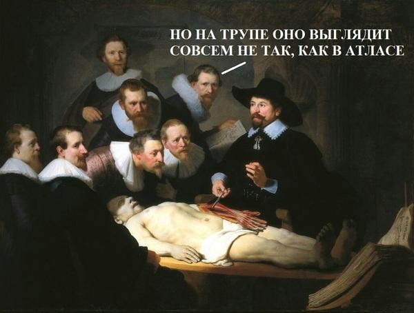 Как в Германии анатомию изучают Германия, анатомия, Медицина, учеба за границей, медицинский университет, препарирование, длиннопост, бонуса нет