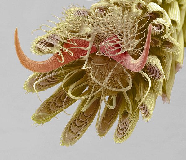 Лапка комара фотография, макро, лучшие научные фото года