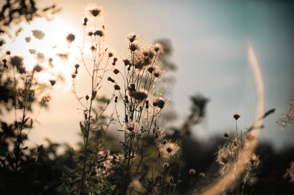 Несколько случайных фото с прогулки Поле, Травы, Блики, Фотография