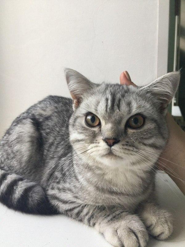 Найденный кот не ест