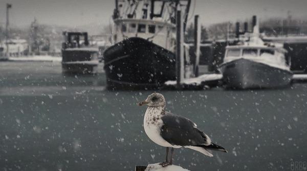 Чайка и снег