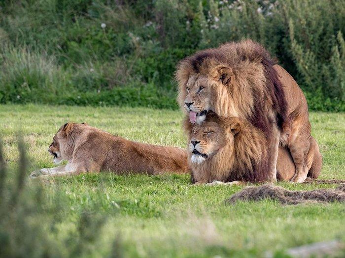 Йоркширский парк дикой и какой-то неправильной природы Гомосексуализм, Animal planet, Гей-Пропаганда