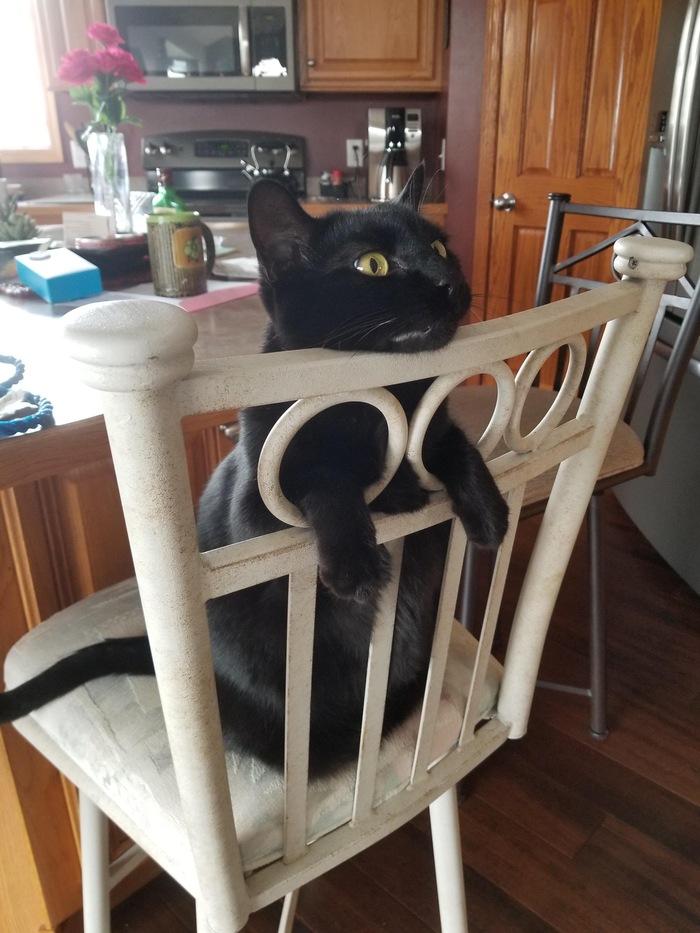 cat litter trays amazon