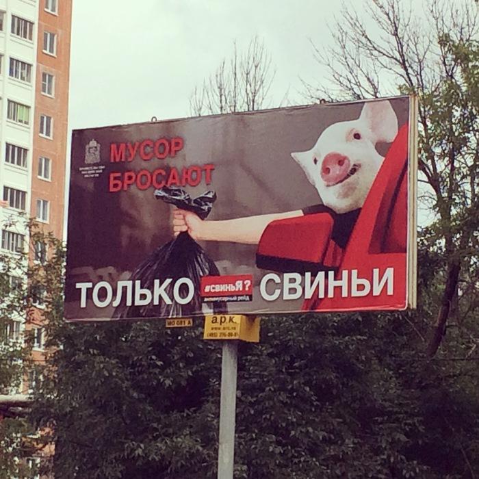Мусор бросают только свиньи Щелково, Реклама, Щит, Свинья, Чистомен, Социальная реклама