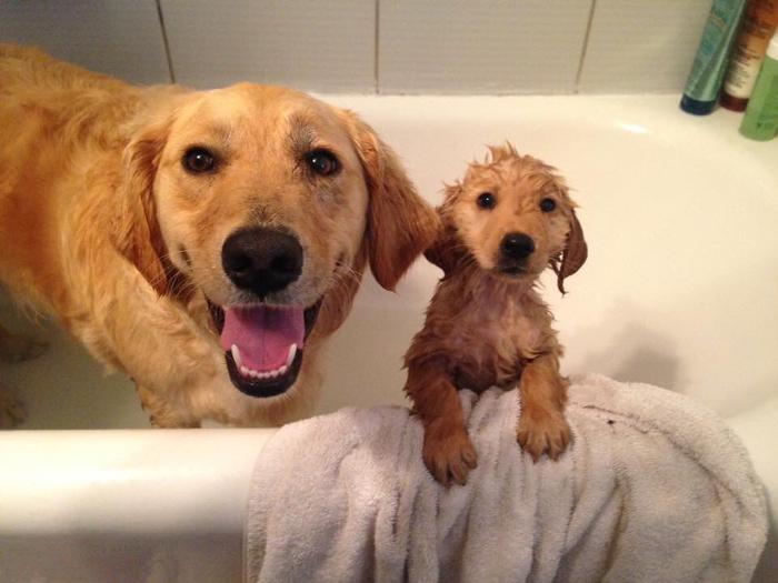 Первая помывка под присмотром мамы