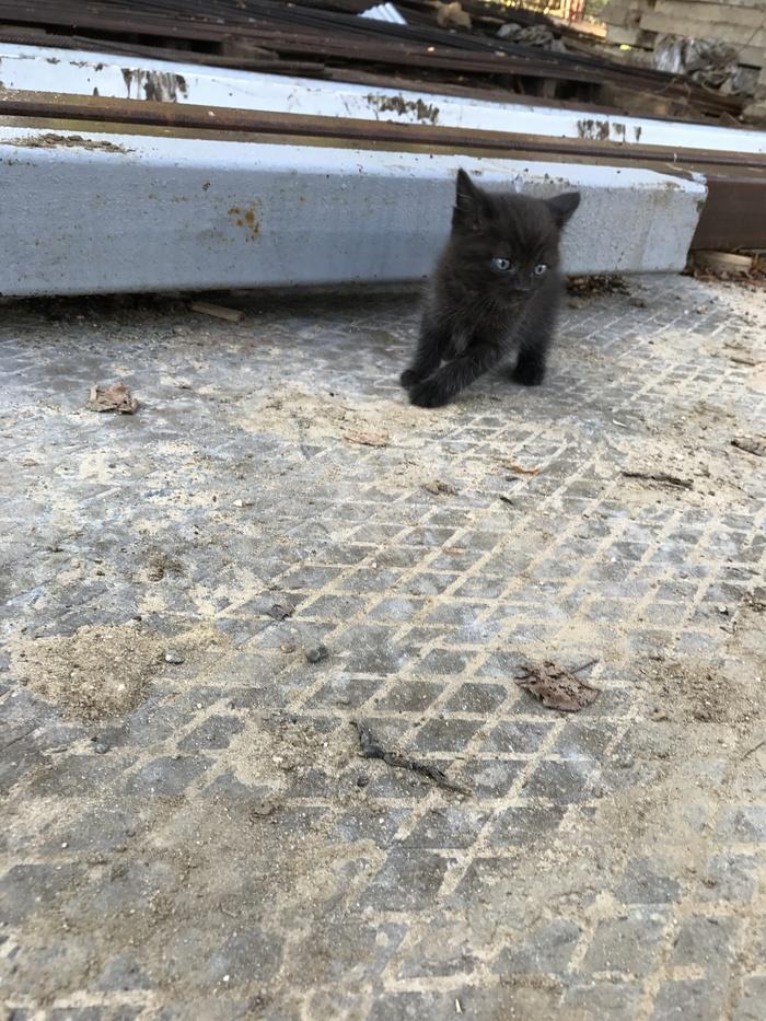 Пристройте котенка в добрые руки. Москва [Нашел дом] Кот, Котомафия, Помогите найти, Длиннопост, Помощь, В добрые руки