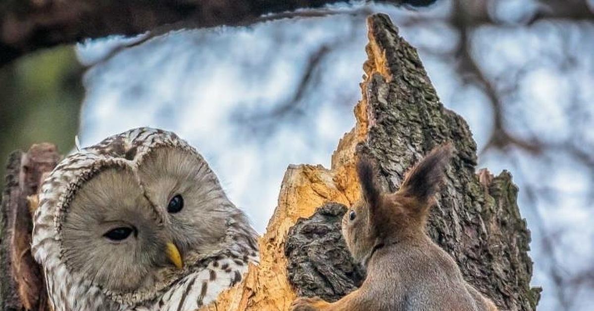 совместное фото совы и белки наших глазах случилось