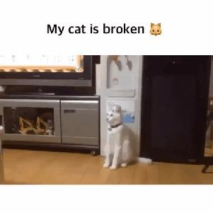 Мой кот поломался