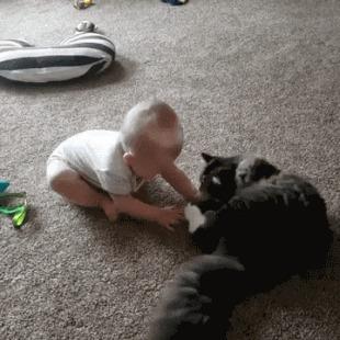 Кот хоть и старше, но не уверен, что научит хорошему )
