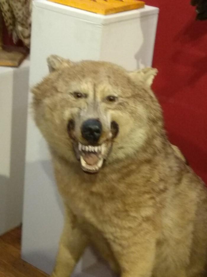 Когда все бесит,  но надо улыбаться и пахать Волк, Чучело, Боль, Улыбаемся и машем, Длиннопост