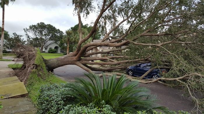 Последствия Ирмы Ураган Ирма, Флорида, Орландо, США, Видео, Длиннопост