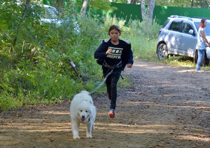 Ездовой спорт в Приморье Ездовой спорт, Приморский край, Собака, Длиннопост