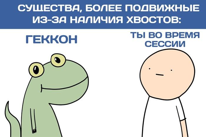 Новость №382: Хвост геккона оказался способом увеличения подвижности суставов Образовач, Наука, Биология, Геккон, Пресмыкающиеся, Хвост, Сессия, Юмор