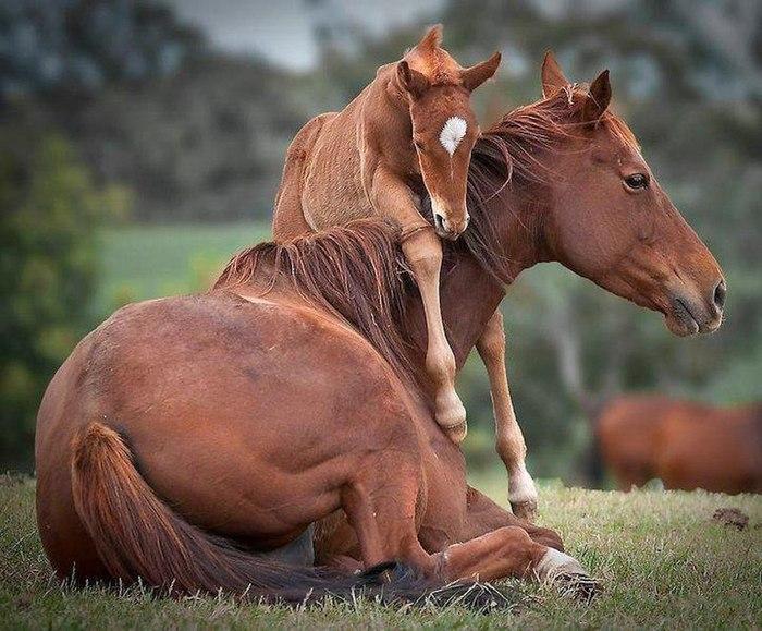 عکس حیوانات نایاب