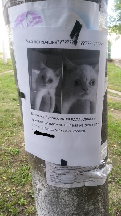 Кажется,эта кошка видела некоторое дерьмо у старых хозяев