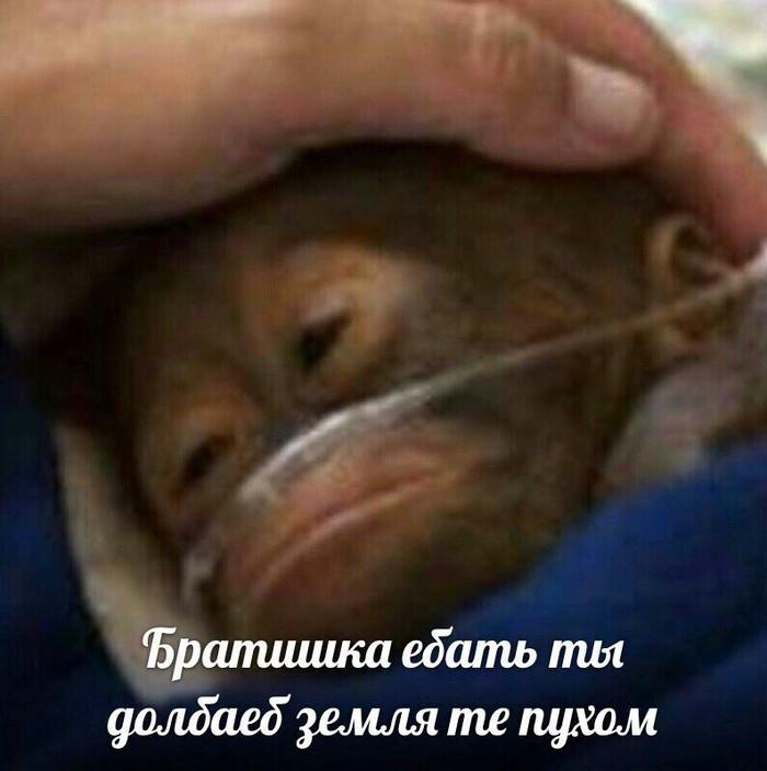 Живу в России