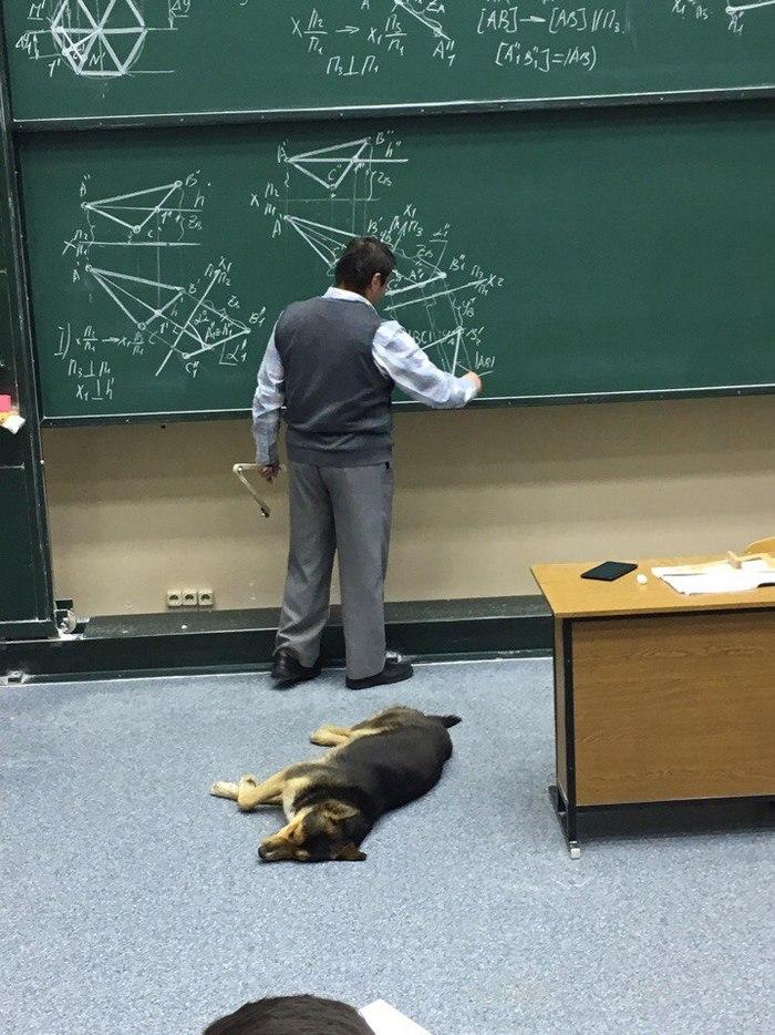 Собачка потянулась к знаниям в Бауманке Собака, МГТУ им Баумана, Лекция, Начертательная геометрия, Видео, Длиннопост