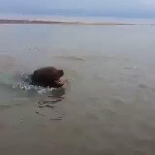Рыбаки решили помочь собачке,но вскоре передумали.