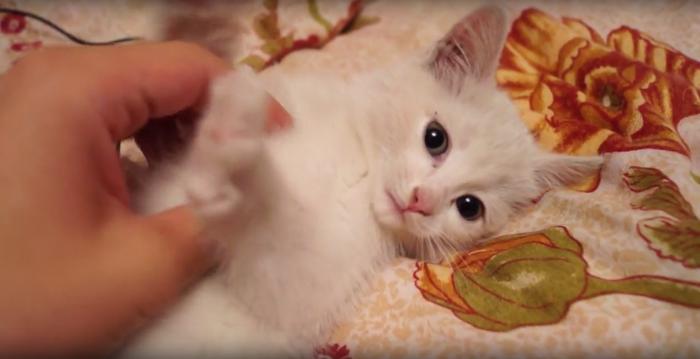 Новосибирский диггер спас котёнка, провалившегося под землю Диггер, Новосибирск, Спасение животных, Кот