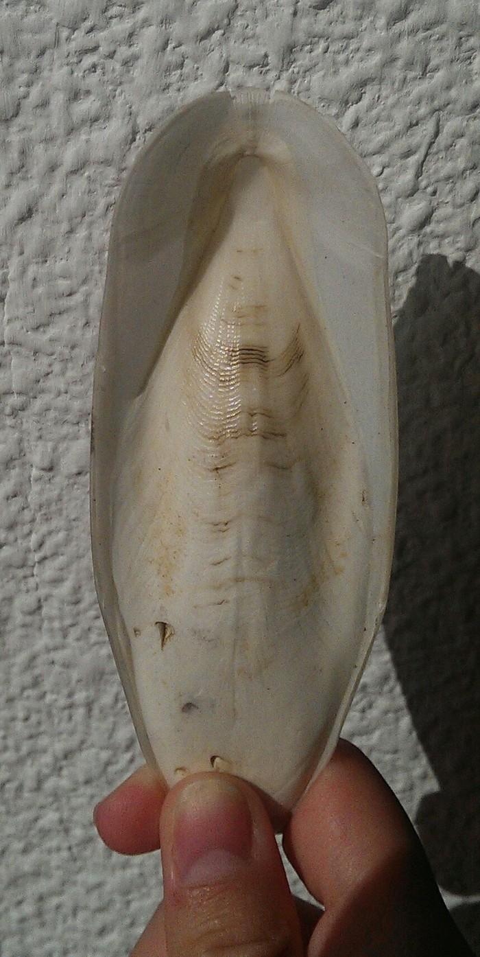 Странные штуки на берегу Каракатица, Море, Непонятно, Биология, Длиннопост