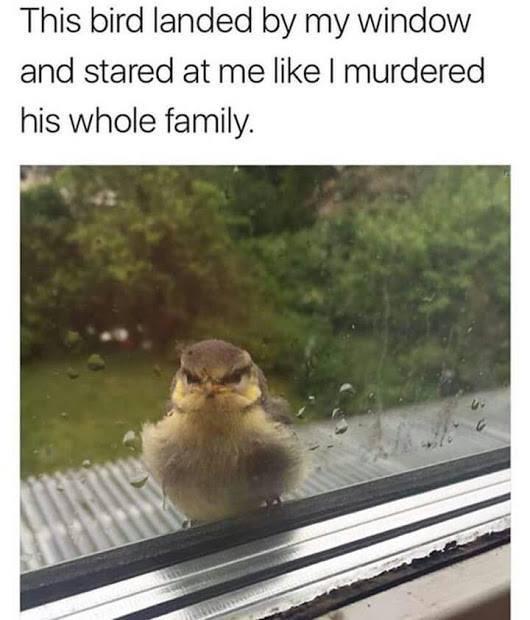 """""""Птиц уселся у моего окна и уставился на меня так, как будто я порешил всю его семью"""""""