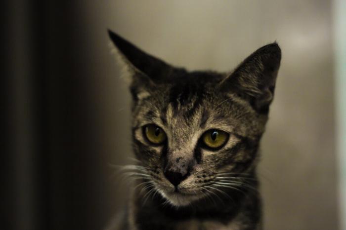 Харизма Харизма, Харизматичный кот, Харизматичность, Кот, Уличный котик