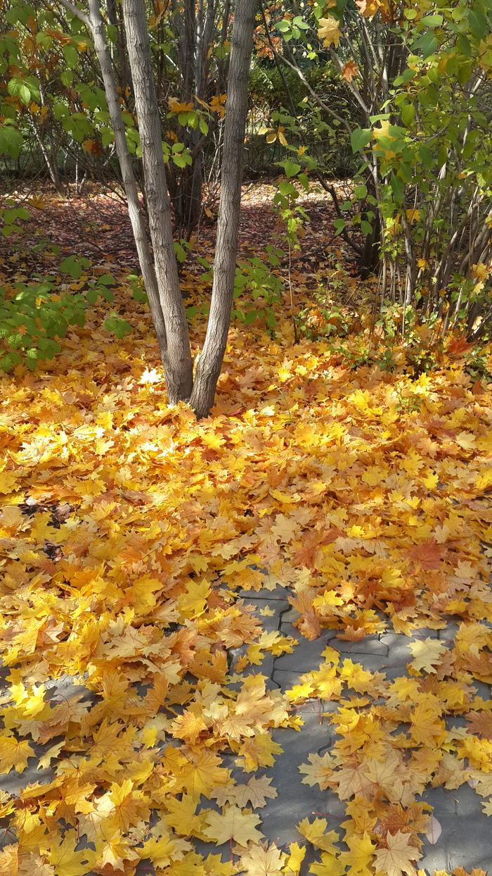 Омская осень Осень, Омск, Моё, Длиннопост