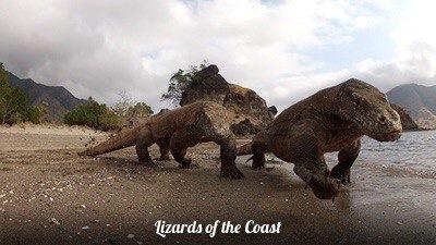 Lizards of the Coast