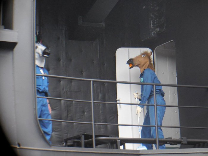 Морские коньки Япония, Twitter, Японский интернет, Кони