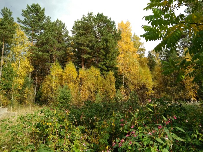 Байкал осень - на мобилу Байкал, Длиннопост, Фотография, Видео, Природа, Осень