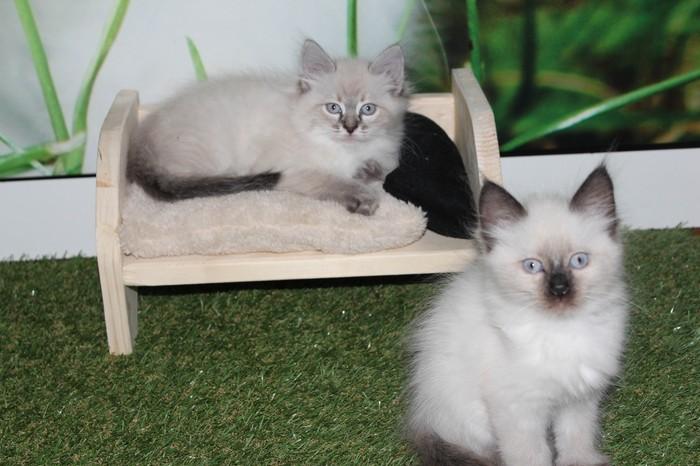 Этот лежак стал самым любимым у котят. Кот, Котята, Король