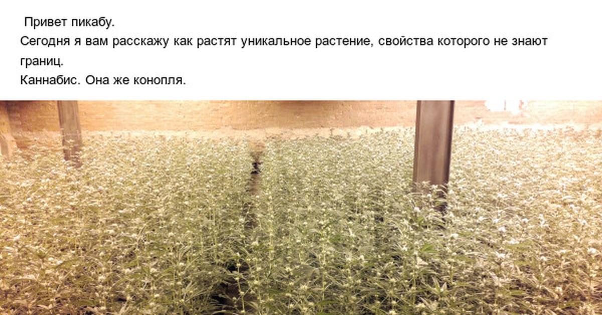 MDA дешево Муром купить гидропонику в новосибирске