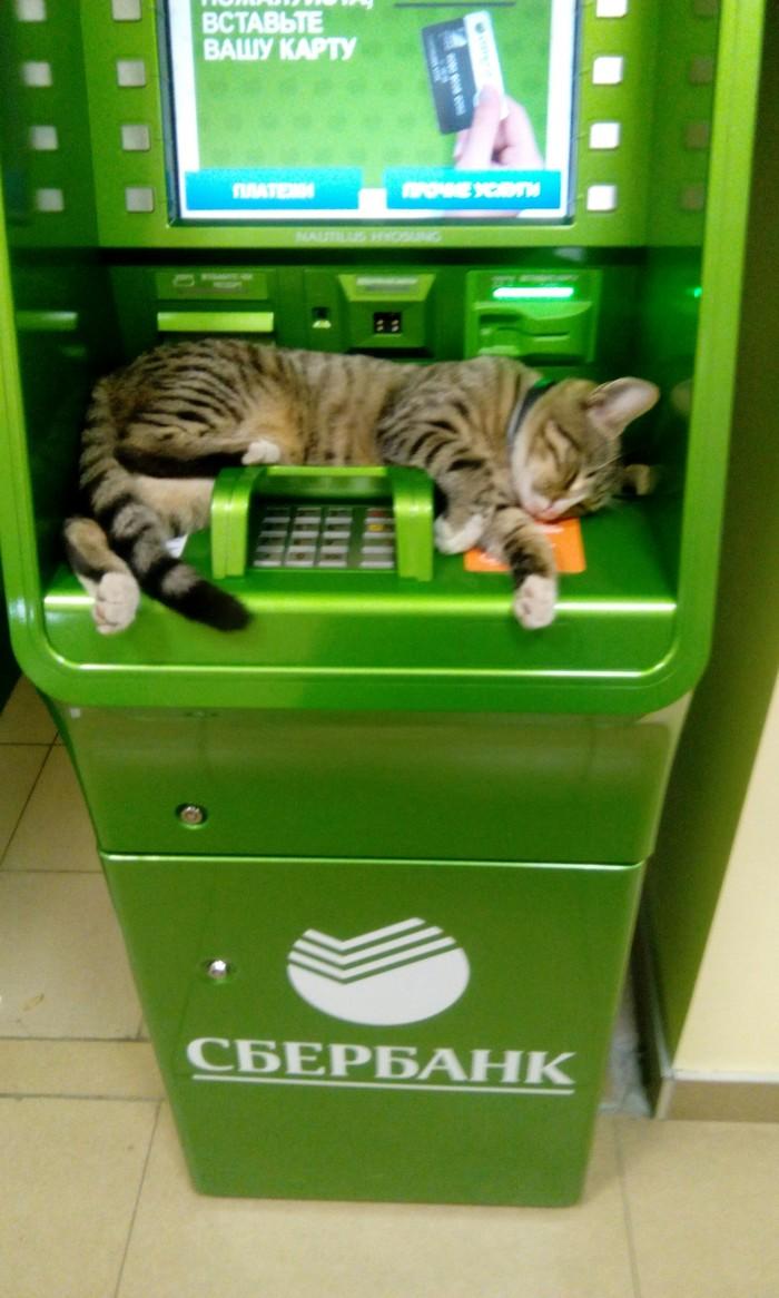 Котейка, защищающий Ваш пин-кот)))