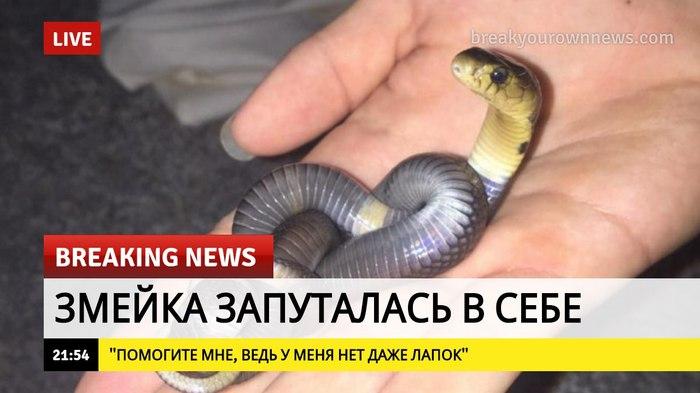 Все мы немного змейка