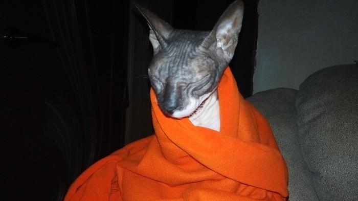 Моя кошка приняла буддизм, сидит, медитирует.