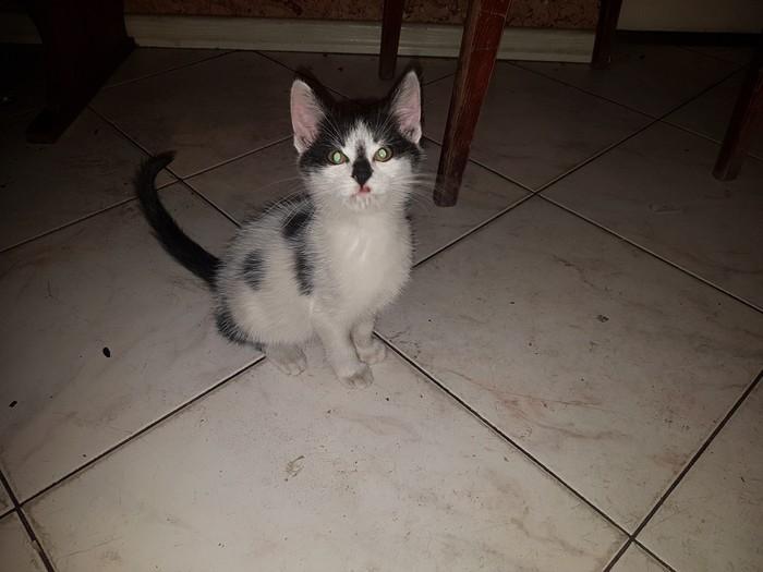 Кот, который вас презирает Кот, Ненависть, Жалкий