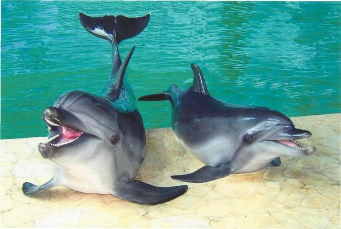 Порно фильмы половой акт с дельфином девушка сует себе член дельфина