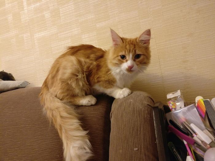 Я снова сильная независимая женщина с котиком :) Кот, Моё, Моё зверьё, Длиннопост