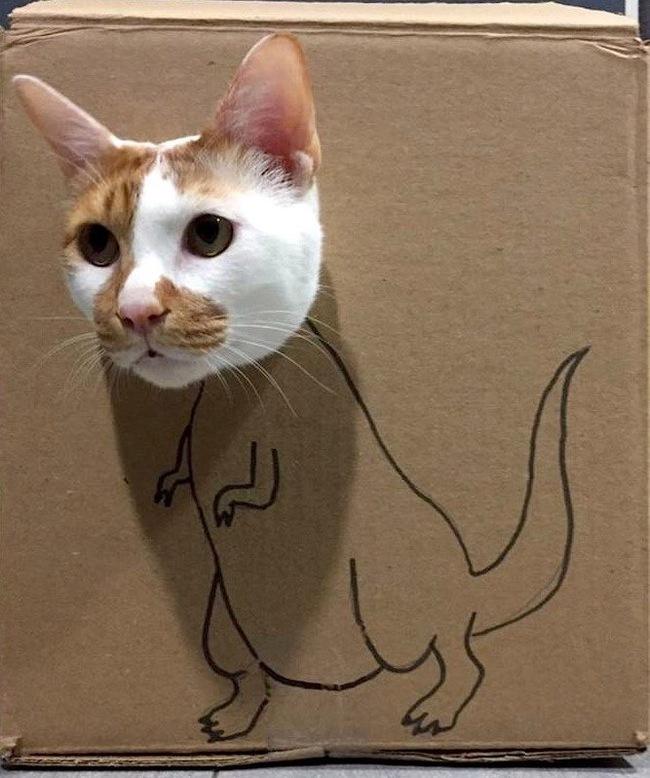 Мемы с котами и диваном