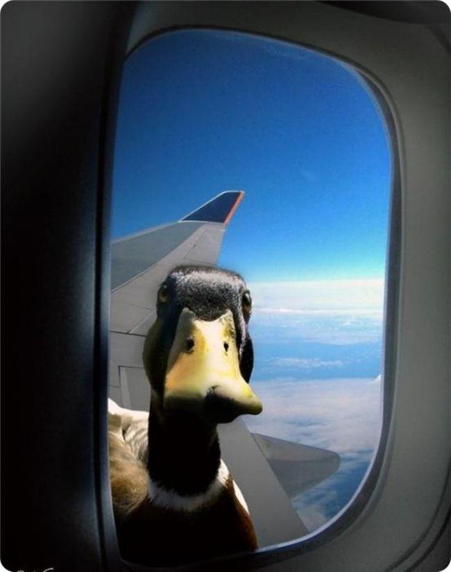 Что происходит, когда птица сталкивается с самолетом? самолет, авиация, птицы, столкновение, видео, длиннопост