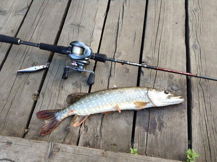 Немного летней городской рыбалки (июнь-август 2017) Рыбалка, Лето, Отдых, Стритфишинг, Длиннопост, Сообщество рыболовов