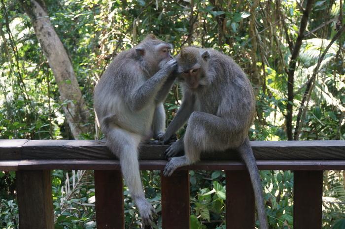 Если вы фрилансер - куда можно податься? Азия: Индонезия Бали, Жизнь за границей, Фрилансеры, Дауншифтинг, Много букв, Длиннопост