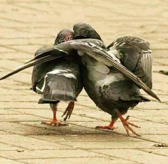 Летим ко мне,у меня гнездо свободное