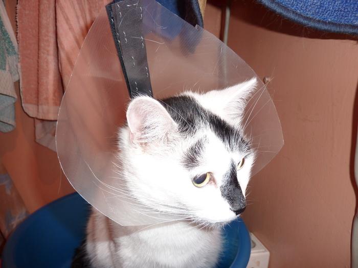 Влияние выбора средства защиты на настроение Кот, Ограничения, Средства защиты, Длиннопост, Моё