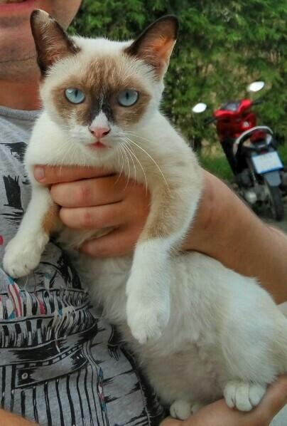Сердитая кошка Кот, Сердитое животное